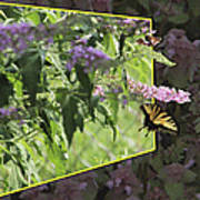 Tiger Swallowtail Oob-featured In Beautycaptured-oof-harmony And Happiness Art Print
