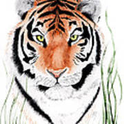 Tiger Tiger Where Art Print