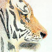 Tiger's Head Art Print