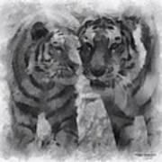 Tigers Photo Art 01 Art Print