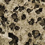 Time Holes - Sepia Tone - Wonderwood Collection - Olympic Peninsula Wa Art Print
