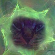 Time Warp Cat Art Print
