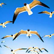 Timeless Seagulls Art Print