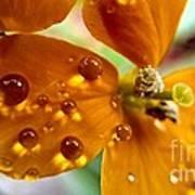 Tiny Dew Drop On Wild Flower Macro Art Print