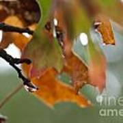 Tiny Leaf Art Print