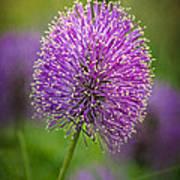 Tiny Purple Wildflower II Art Print