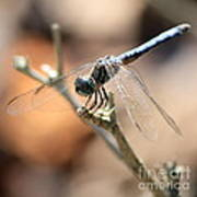 Tired Dragonfly Square Art Print