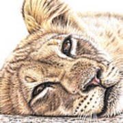 Tired Young Lion Art Print