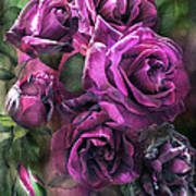 To Be Loved - Purple Rose Art Print
