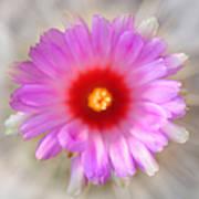 To Return To Innocence. Cactus Flower Art Print by Jenny Rainbow