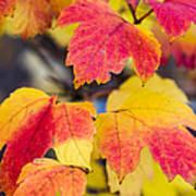 Toasted Autumn - Featured 3 Art Print