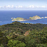 Tobago Rainforest Art Print