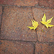 Together Yellow Maple Leaves Art Print