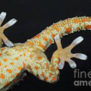 Tokay Gecko Feet Art Print