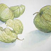 Tomatillos Print by Maria Hunt