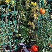 Tomato Garden. Art Print