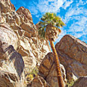 Top Of A Palm Near Top Of Andreas Canyon-ca Art Print