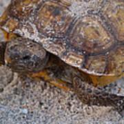 Tortoise By Nature Art Print