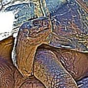 Tortoise One Art Print