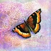 Tortoiseshell Butterfly Art Print