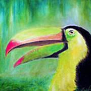 Toucan Land Art Print