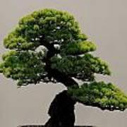 Touch Of Bonsai Art Print