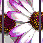 Touch Of Pink Osteospermum Trio Sample Art Print