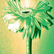 Touch Of Turquoise Zinnia Art Print