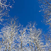 Touching The Winter Sky Art Print