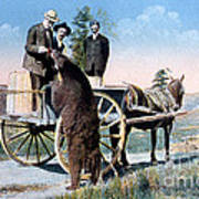 Tourist Feeding Bear Yellowstone Np Art Print
