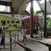 Tourists In A Queue At One Of The Exhibits Inside The Jurong Bird Park Art Print