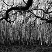 Towards The Silver Birches Art Print