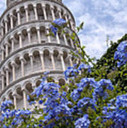 Tower Of Pisa With Blue Flowers Art Print