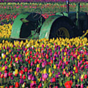Tractor In The Tulip Field, Tulip Art Print