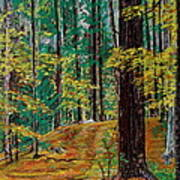 Trail At Wason Pond Art Print