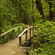 Trail Bridge Toketee 1 Art Print
