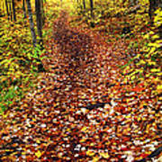 Trail In Fall Forest Art Print