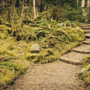Trail Through The Moss Art Print