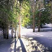 Trail To Bear Lake 4490 Art Print