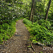 Trail To Chimney Tops - D005669a Art Print