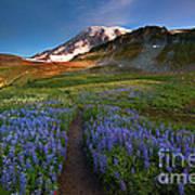 Trail To Majesty Art Print