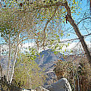 Trailhead Area In Andreas Canyon In Indian Canyons-ca Art Print