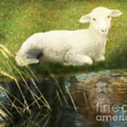 Transformation Lamb Or Lion Art Print