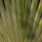 Traveller's Palm Patterns Dthb1542 Art Print