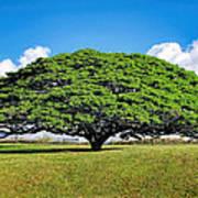 Tree 10 Art Print