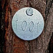 Tree 1001 Art Print