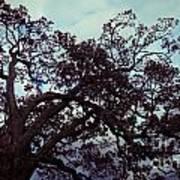 Tree Against Sky Art Print