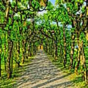 Tree Alley In Castle Park Art Print