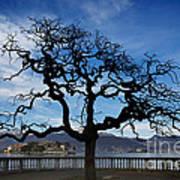 Tree And Borromee Islands Art Print