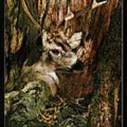 Tree And Buck Art Print